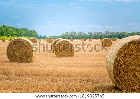 Big round straw bales of straw in the field after the harvest Foto stock ©