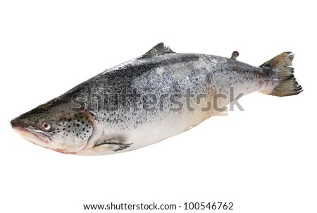 Big salmon fish isolated on white