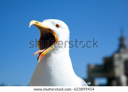 Big seagull calling congeners with a widely opened beak on blue sky background - Shutterstock ID 623899454