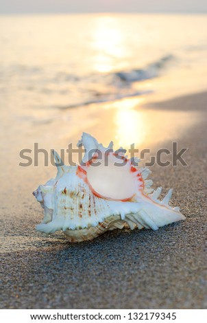 big seashell background on the sandy beach against waves and sunset