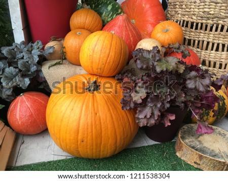big seasonal orange pumpkins, autumn harvest, halloween #1211538304