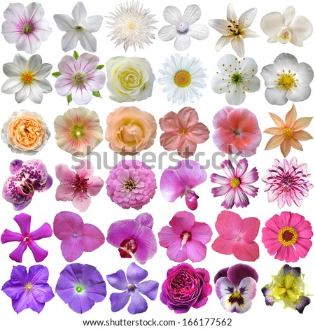 Big Selection of Various Flowers Isolated on White Background Stock photo ©