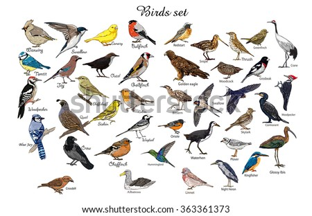 big set birds. birds flying, animals, bird silhouette, bird illustration