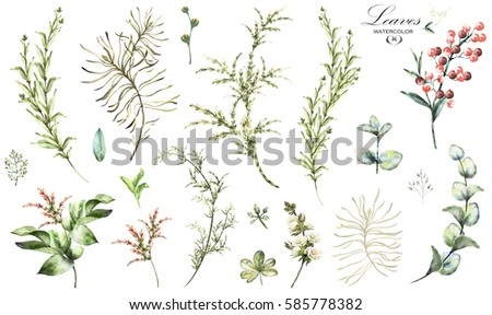Big Set  elements - herbs, leaf, berry. collection garden and wild herb, leaves, branches,  watercolor illustration isolated on white background, eucalyptus, exotic, tropical leaf. Green, Wildflowers