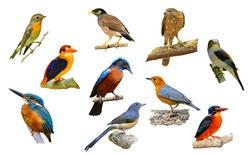 big set of birds from Thailand.