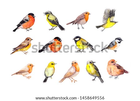 Big set of birds - robin, tit, finch, sparrow, other small wild and domestic bird.  Watercolor collection Сток-фото ©
