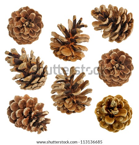 Big set of cones various coniferous trees isolated on white