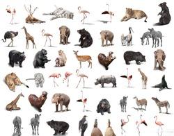 big set of wild animals isolated on white background
