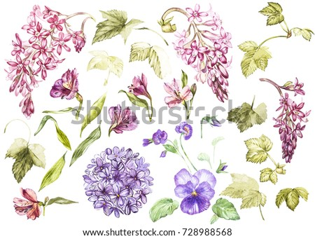Shutterstock Big Set Watercolor collection with plants elements - leaf, flowers. Botanical illustration isolated on white background. Floral nature. Flowers of black currant, Alstroemeria, Lilac and Pansy.