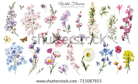 Big Set watercolor elements - wild flowers, herbs. collection wild meadow flowers, branches.  illustration isolated on white background. Botanic