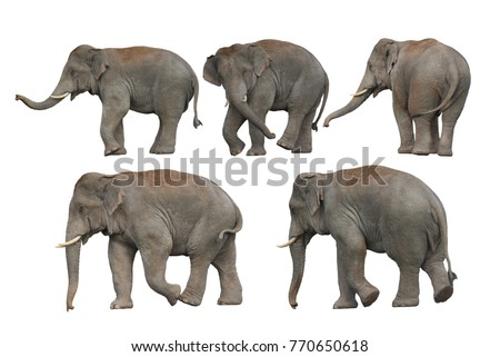 Big set , Wild elephant isolated on white background