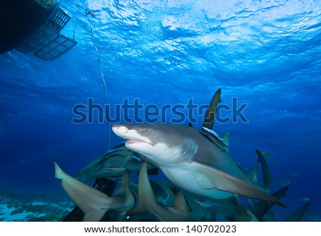 Big sharks under boat