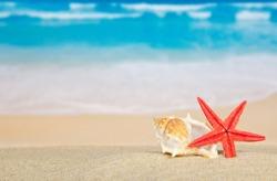 Big sink and starfishes on sea sand