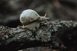 big snail on tree bark