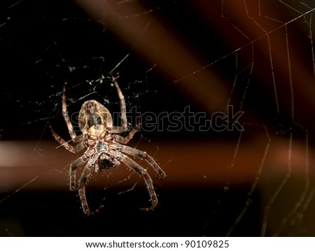 Big spider hanging on a web