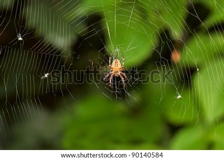 Big spider on hunt for insects, hanging on cobweb