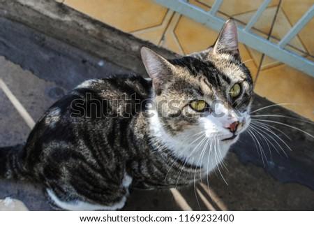 Big stray cat looking at the camera #1169232400