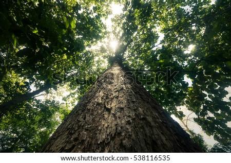 Big tree #538116535