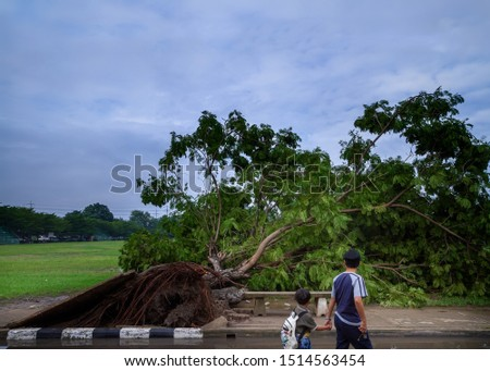 Big tree fallen and uprooted on footpath after heavy rain from the thunder storm with dark cloudy sky background. Picture for natural disaster and environment or meteorology or transportation concept.