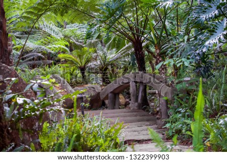 Big tree fern on rain forest at Siriphum Waterfall with Stone bridge and stone walkway at Doi Inthanon National Park, Chiang Mai, Thailand.