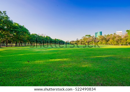 Stock Photo Big tree green grass in the park sun beam