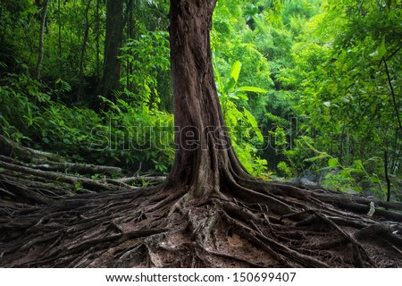 Big tree in forest. Green life background