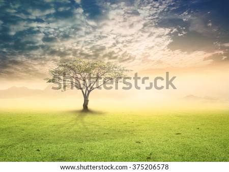 Big tree on the green spring meadow in mountain. Tree of Knowledge New Life Education Religion God Eden Adam Eve Heaven Word Holy Bible Love World Environment Day Card Spring Time Eco Nature concept.