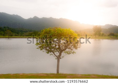 big tree,river and mountain with sun light background #1193576662