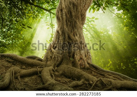 big tree roots and sunbeam in a green forest #282273185