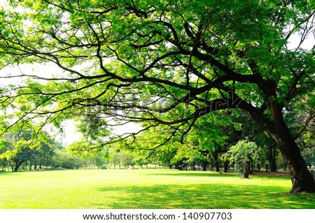 Big tree's branches with fresh leaves on green meadow in sunny day