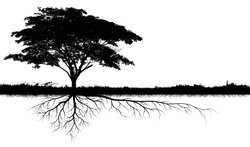 big tree silhouettes with root isolated on a white background