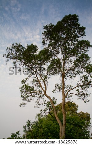 Big tree with blue sky