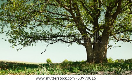 Big tree with branches and land with herbs