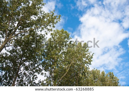 Big trees facing the blue sky with clouds