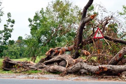 Big trees uprooted for   Super cyclone Amphan- Kolkata India- 25th May 2020