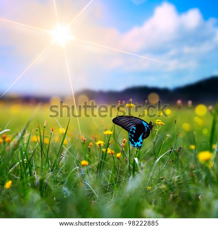 big tropical butterfly sitting on green grass field with flowers