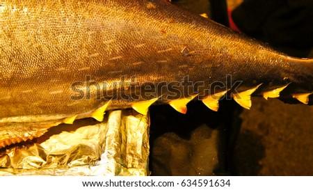 Big Tuna from Deep Sea