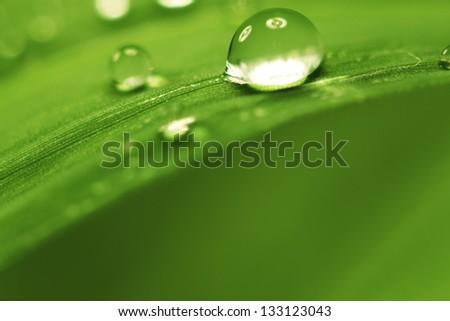 big water drop on grass blade