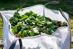 Big white bag with organic green garden waste. Local councils collecting green waste to process it into green energy and compost.