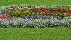 Big wide flowerbed with various flowers and plants among saturated green grass in sunny summer day
