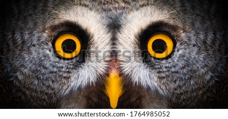 Big yellow eyes of a owl close-up. Great owl eyes looking at camera. Strigiformes nocturnal birds of prey, binocular vision ストックフォト ©