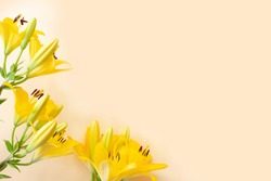 Big yellow flowers lilies on light background. copy space. Floral greeting card, flat lay.