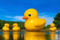 Big yellow rubber ducks in the lake