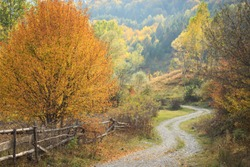 Big yellow tree with wood fences near the road. Pathway through in the forest at autumn landscape.