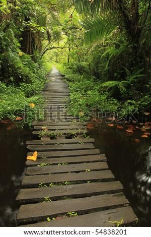 Bigodi Wetlands in Uganda - The Pearl of Africa