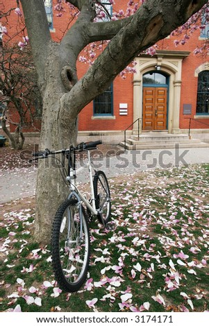 bike leaning up against magnolia tree