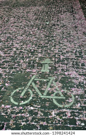 bike pictogram sign on road covered with faded cherry blossoms  #1398241424