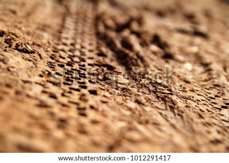 Bike tire tracks on wet muddy trail royalty, road, abstract background, texture material / Tyre track on dirt sand or mud, retro tone, grunge tone, drive on sand, off road track.