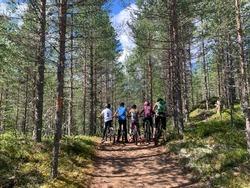 bikeride in forest, summer activity outdoor
