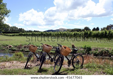 Bikes in vineyard